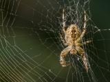 2013_Glaubitz-Spinne-5195