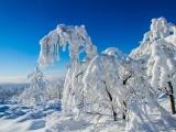 2013-07_Winter-Zinnwald_5336