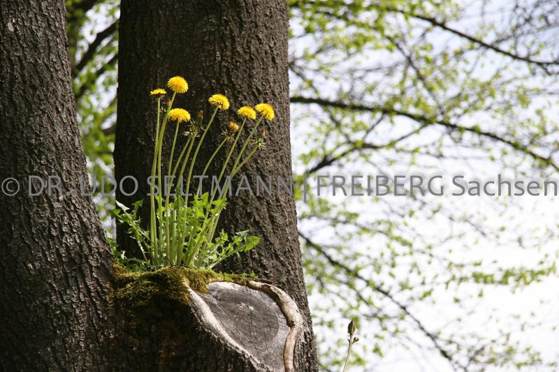IMG_0094_Lauenstein_2006