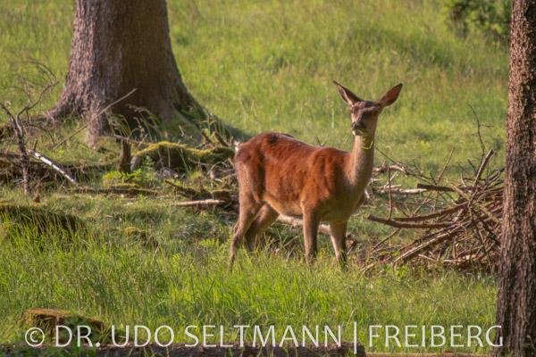 2013-07_Frauenwald_B-3572