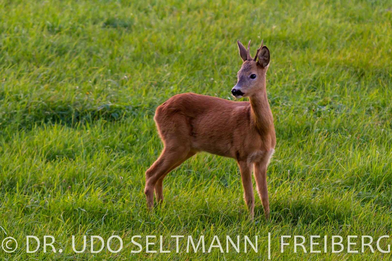 2013_Helbigsdorf-4752