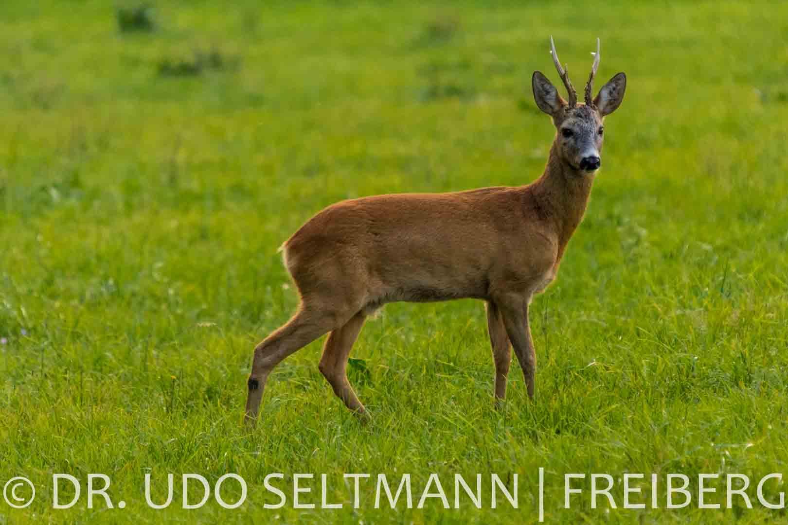 2013_Helbigsdorf-4808