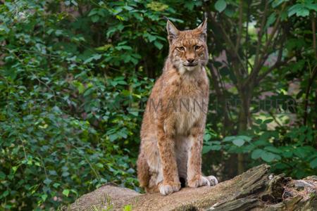 Aufnahmen 06 + 09/2014 im Wildpark Johannismühle