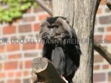 2007-05_Lpz-Zoo-3329-II