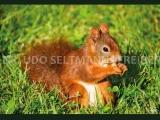 03 Eichhörnchen (mit WissensEule)