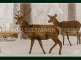 GK 208 Rotwild im Winter (mit WissensEule)