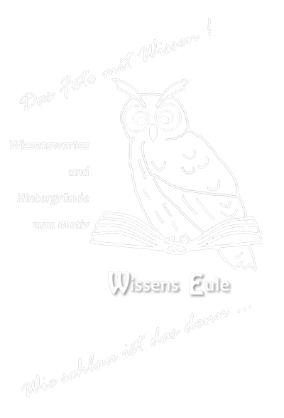 WissensEule-Slogan_180x180_weiss