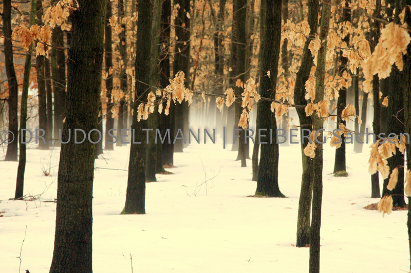IMG_5858_Reichenbach_2006